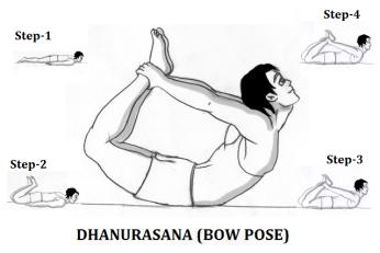 धनुरासन  (Dhanurasana)